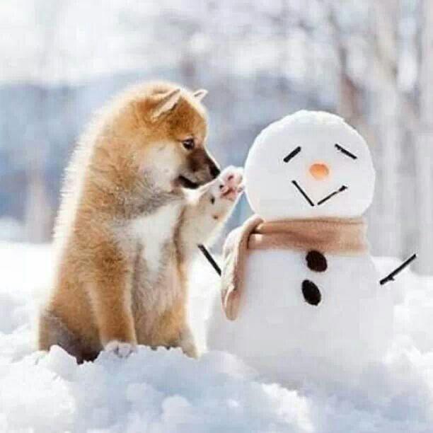 春秋冬の画像を貼ってください。