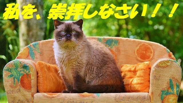 「猫の十戒」が「犬の十戒」と比べて上から目線でおもしろい   ANIMALive