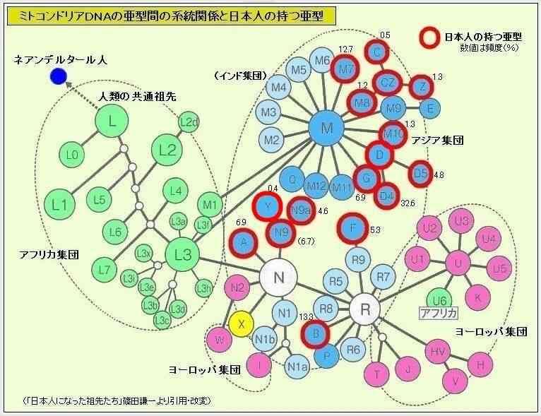 mtDNAからみた日本人の祖先