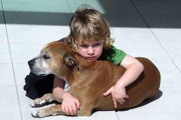 「なぜ犬の寿命は人間よりも短いのだろう?」 大親友だった愛犬がこの世を去った時、少年が語った感動の答え。 : カラパイア