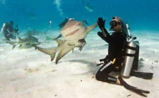クジラやホオジロザメ、シャチなど海の大きな生き物が好きな人
