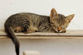 キジトラ猫好きさん集まれ!