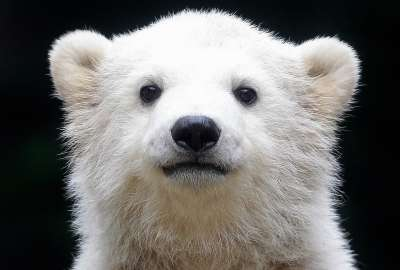 クマ被害、こう防ぐ…環境省が対策パンフレット
