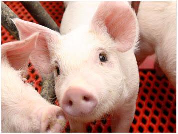 豚こまレシピお願いします!
