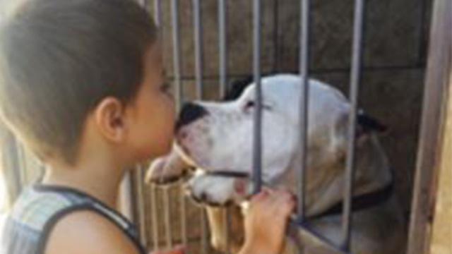 カナダでイヌ駆除の法律が成立…多くの人たちがイヌの命のために動く | ANIMALive