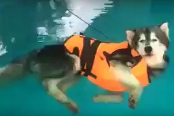 やる気ないだろ…水泳のレッスン中、ただただプールを漂い続けるワンコが笑える