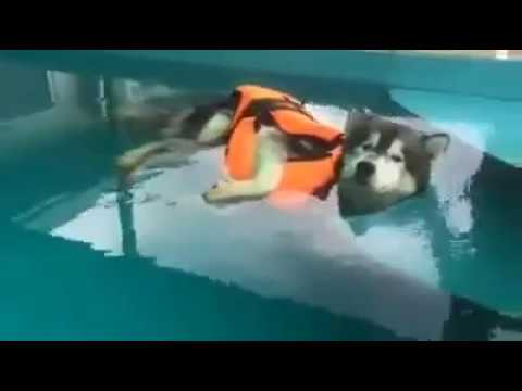 Dog Takes Swimming Lessons - YouTube