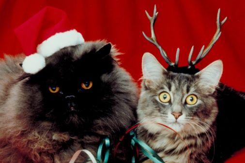 愛犬、愛猫と楽しもう♡クリスマスにぴったりなペットご飯レシピ☆ - NAVER まとめ