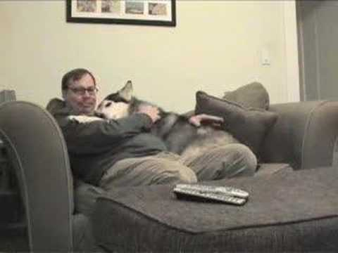 Dog Hug - YouTube