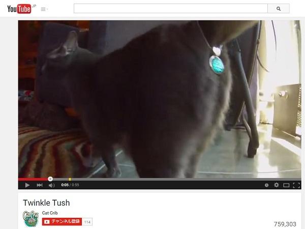 猫用「お尻の穴アクセ」が物議