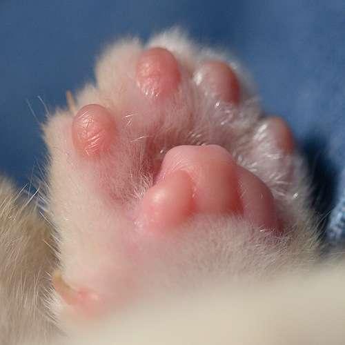 猫・犬・!・の肉球画像10選【癒】 | ANIMALive