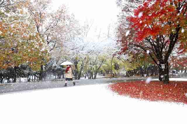 11月の積雪、都心では観測史上初 都内では14人けが:朝日新聞デジタル