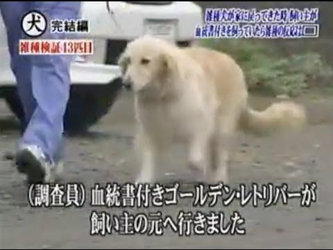 トリビアの種「雑種犬が家に戻ってきた時、自分の飼い主が見知らぬ血統書付きの犬をかわいがっていたら雑種の反応で最も多いのは???」 - YouTube