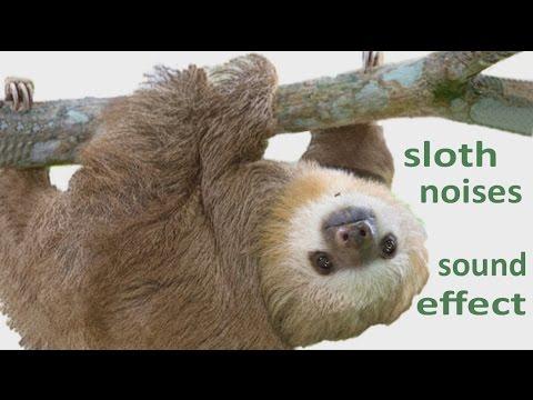 The Animal Sounds: Sloth  Noises -  Sound Effect - Animation - YouTube