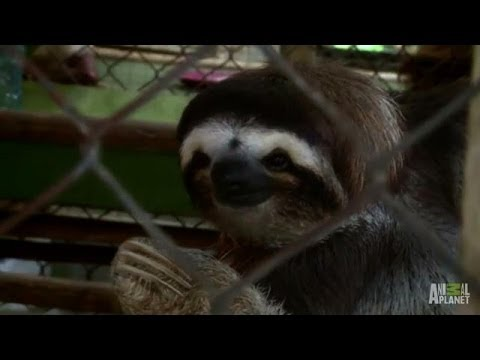 Saucy Samantha Calls for Suitors | Meet the Sloths - YouTube