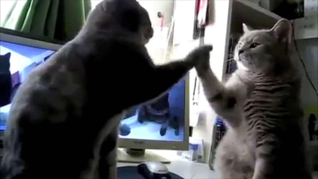 猫の対話。天才的。 - YouTube