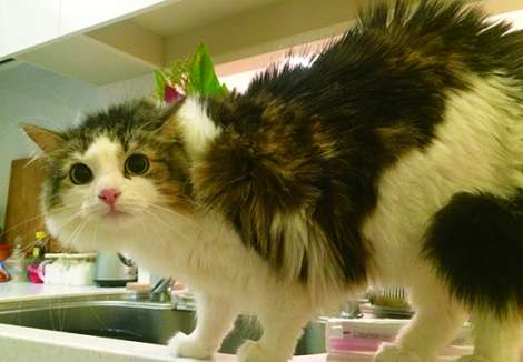 ダレノガレ明美、念願の愛猫フォトブック発売 全写真を自ら撮影