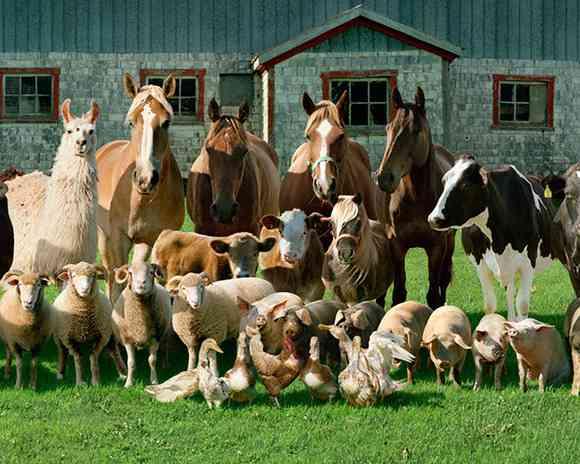 「30匹の犬たち全員がカメラを向いた集合写真を撮りたい…」→その結果w