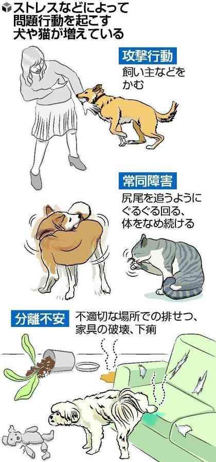 室内飼いのストレス…犬猫の問題行動に「心の病」