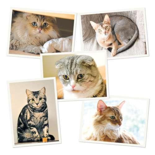 猫ブームで懸念高まる 猫に広がる遺伝性疾患 犬と「同じ轍」踏むか