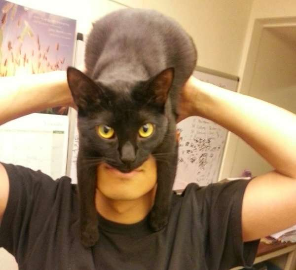 猫をかぶっている人