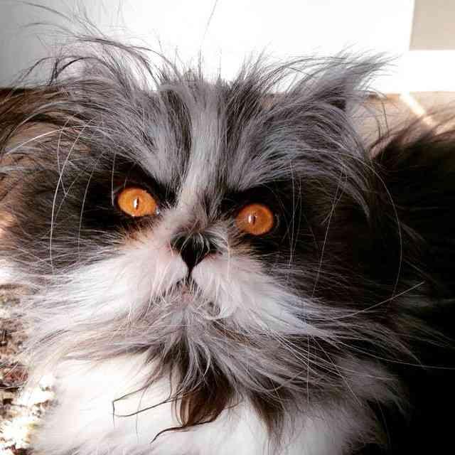 犬?猫?それとも…?長い毛を蓄えたペットの正体にネットが大盛り上がり