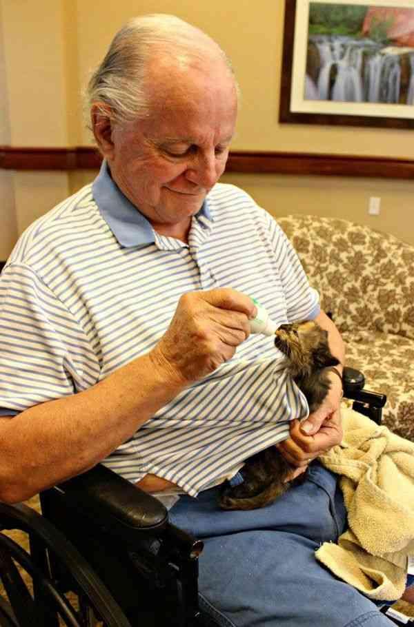 身寄りのない子猫を、高齢者が育てる取り組みが米の老人ホームで行われ話題に