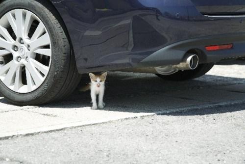 冬場は特に危険! エンジンルームに侵入する猫はいったいどこから入ってる!? | わんにゃふる!