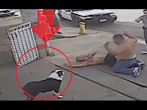【ほっこり】ギャングのケンカに犬が乱入!まさかの展開に思わずほっこりww - YouTube