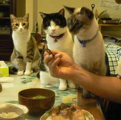 食いしん坊な動物の画像