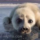 雪とかわいい動物:  | ANIMALive