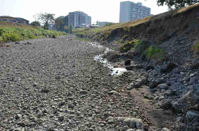 入間・霞川:埼玉で川消える 干上がり川底が露出 - 毎日新聞