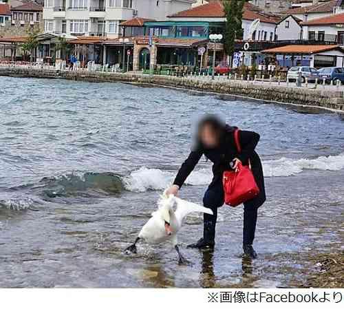 「一緒に写真」首掴み白鳥死ぬ、旅行者の写真がネット拡散で大炎上