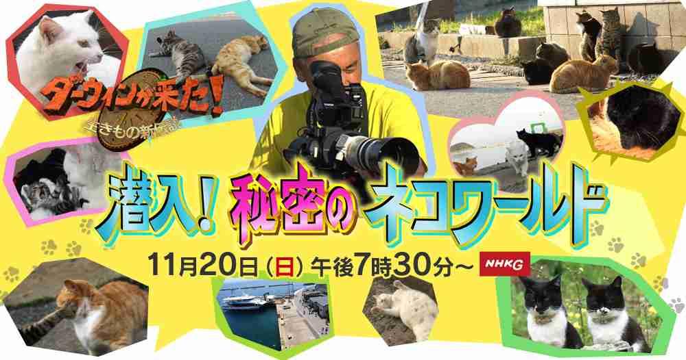 11月20日はネコ大特集!『潜入!秘密のネコワールド』|ダーウィンが来た!