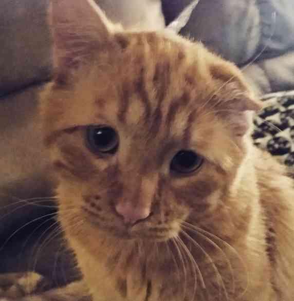 悲しい表情が戻らなくなってしまった猫 安楽死前日に保護され今は幸せに