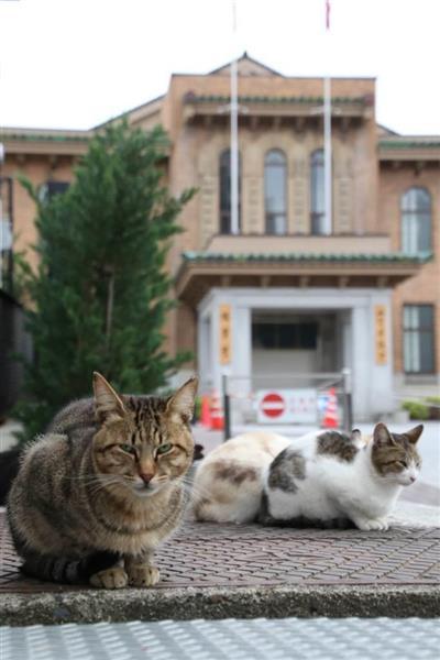 【困ったニャン騒動】山梨県庁が猫の新名所に 猫ファンVS近隣住民 知事は「共生」表明(1/3ページ) - 産経ニュース