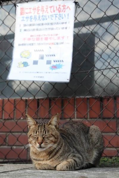 山梨県庁が猫の新名所に、猫ファンVS近隣住民…知事は「共生」表明