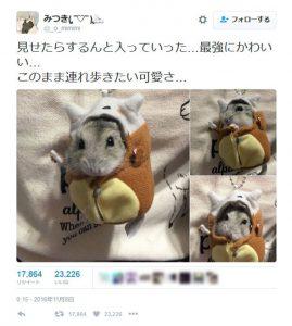 カラカラの寝袋を着るハムスター 「非常に癒された」と報告相次ぐ - ライブドアニュース