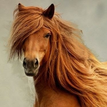 ロン毛の似合う有名人♂の画像