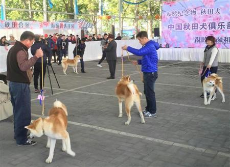 中国で「ニセ秋田犬」横行 血統良ければ1000~2000万円で取引 (夕刊フジ) - Yahoo!ニュース