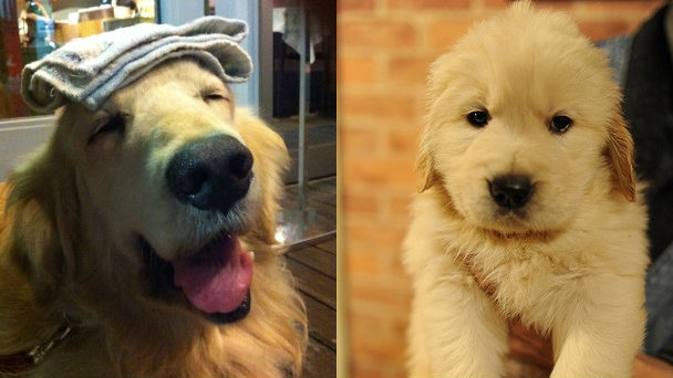 twitterで話題「#犬に名前を付けた日の事を話そうよ 」20のエピソード | ANIMALive