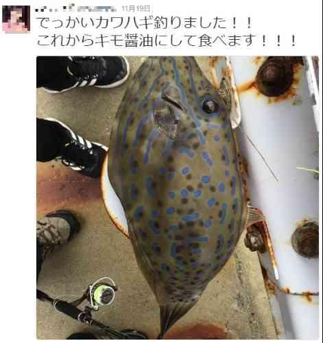 「これから食べます!」釣り人がTwitterユーザーの指摘で九死に一生 - ライブドアニュース