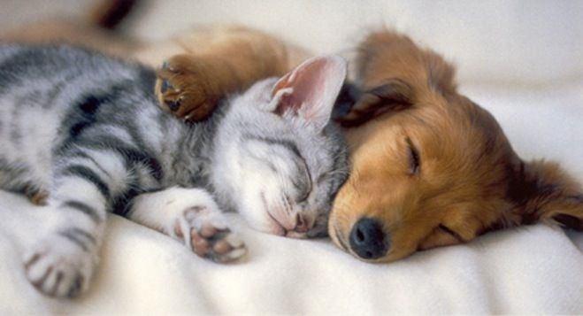 イヌやネコは眠っている時どんな夢を見ているの?