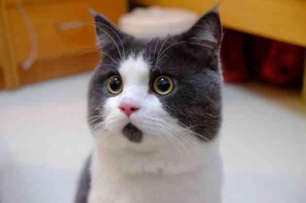 「魚氷漬けリンク」批判へご当地ヒーローが異論 「昆虫標本は?」「動物をペットと称し監禁」