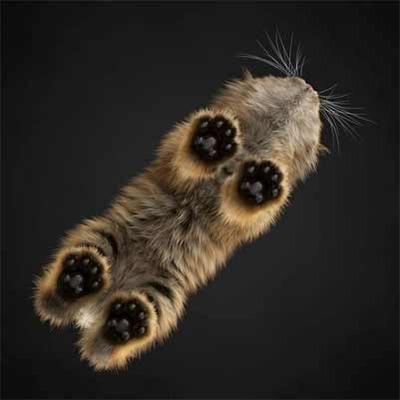 猫の好きな部位