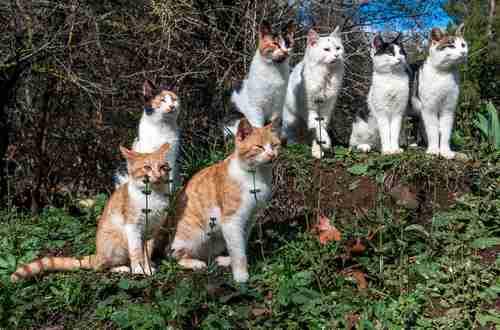 猫好きとして覚えたい『猫の毛色・種類別の呼び名22種』 | PECO(ペコ)