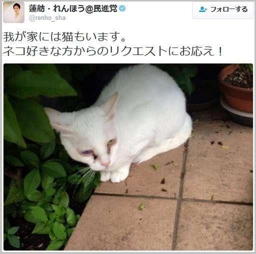蓮舫が飼っている猫の様子がおかしいと騒ぎに 虐待の疑いも…