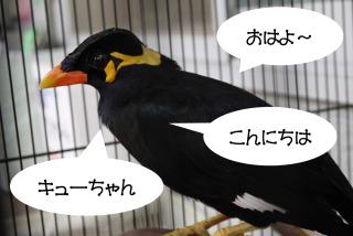 おしゃべりな鳥を飼ったら、、、
