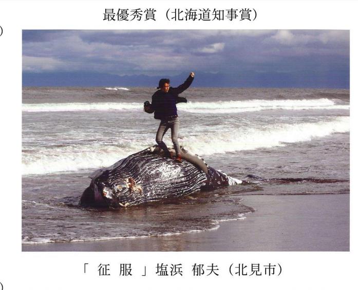 ウミガメの上に乗りサーフィン姿!SNSに投稿し炎上→約158万円の罰金を科せられる