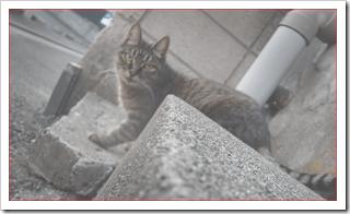猫がエンジンルームに入る事故を防ぐ対策は?JAFに連絡?  |